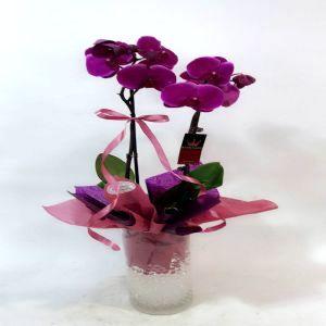 Salon Des Fleurs-Premium Purple Orchid