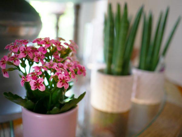 Salon Des Fleurs Christmas Orchid Arrangement
