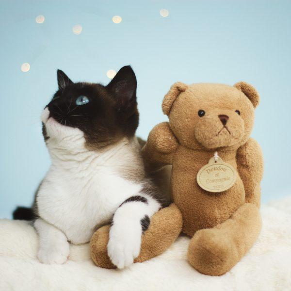 Salon Des Fleurs Medium Boy and Girl Teddy Bear