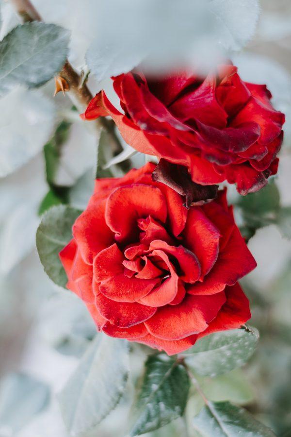 Salon Des Fleurs Soft Rose Bouquet