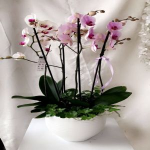 Salon Des Fleurs-Bliss White & Purple Orchids