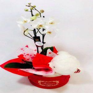Salon Des Fleurs- Orchid in a Box