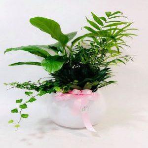 Salon Des Fleurs - Small Garden